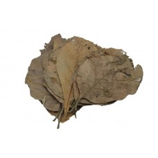 Teak leaves 10x