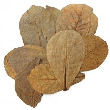 Catappa leaves