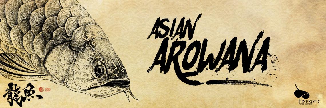 Arowana Asiatica