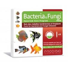 Bacteria & Fungi - Água Doce