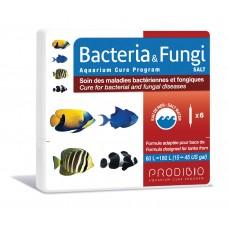 Bacteria & Fungi - Água Salgada